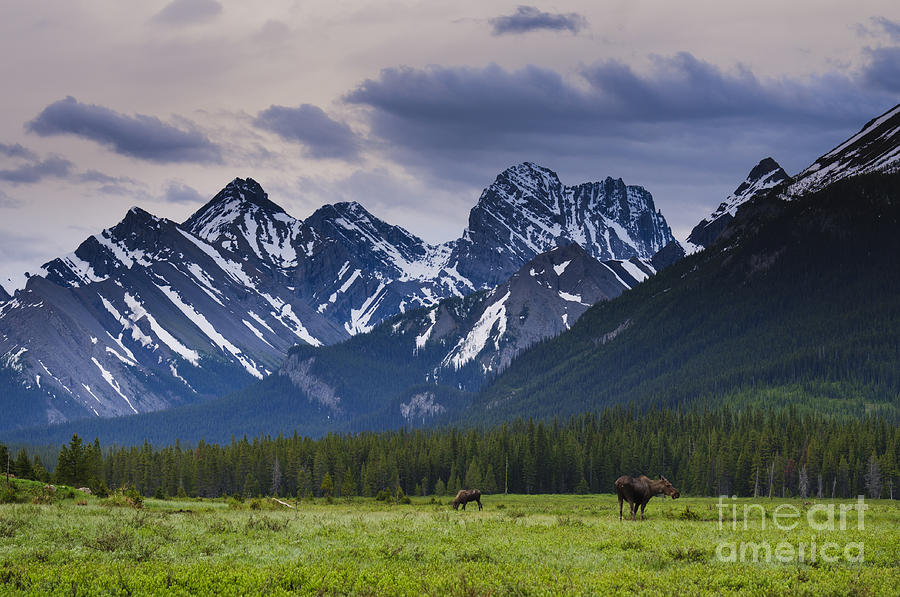 Alberta Photograph - Engadine Meadow by Ginevre Smith