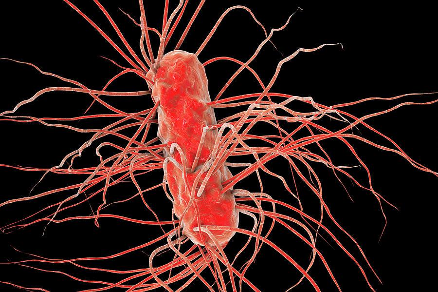 3d Photograph - Escherichia Coli Bacteria by Kateryna Kon/science Photo Library
