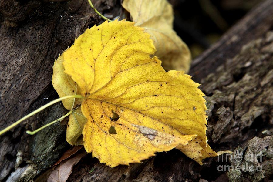 Fall Photograph - Fall by Rick Rauzi