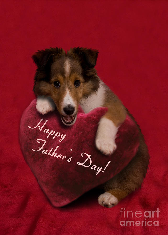 Holiday Photograph - Fathers Day Sheltie Puppy by Jeanette K