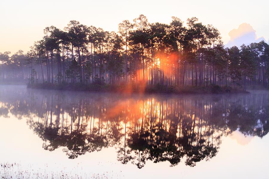 Everglades Photograph - Foggy Sunrise At Long Pine Key by Jonathan Gewirtz