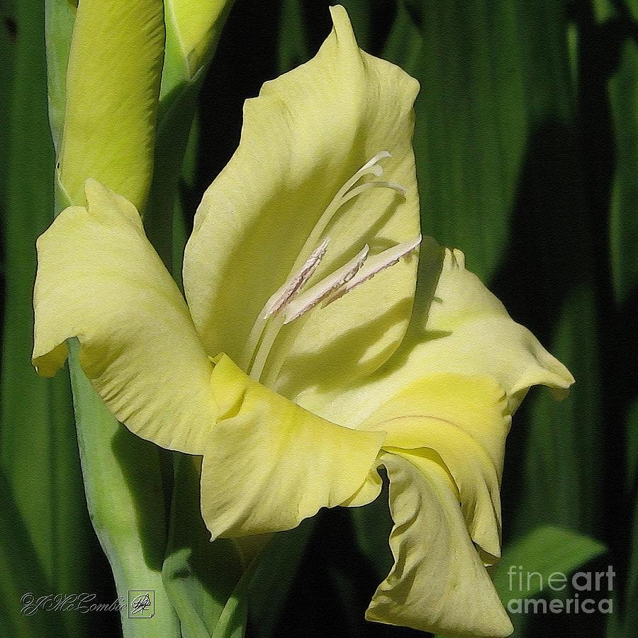 Gladiolus Painting - Gladiolus Named Nova Lux by J McCombie