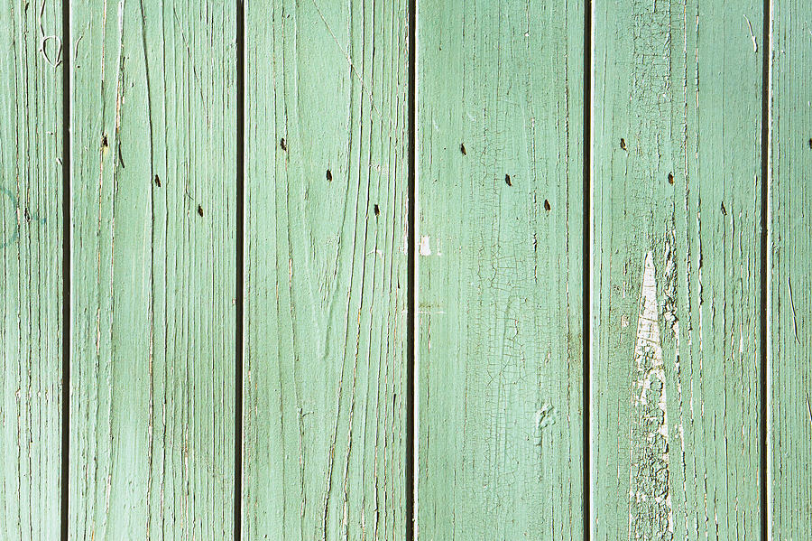 Abstract Photograph - Green Wood by Tom Gowanlock