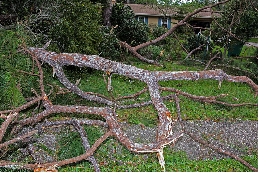 Branches Photograph - Hurricane Irma Residential Storm Damage by Millard H. Sharp