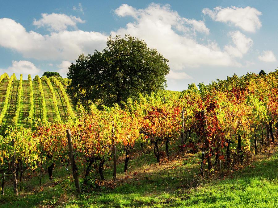 Abundance Photograph - Italy, Tuscany, Chianti, Autumn by Terry Eggers