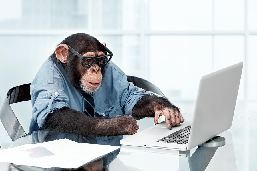 Male chimpanzee in business clothes Photograph by Lisegagne