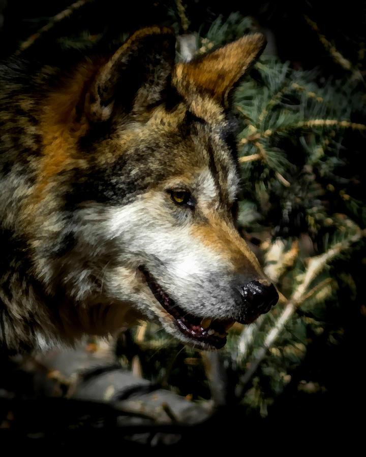 Wolf Digital Art - Mexican Grey Wolf by Ernie Echols