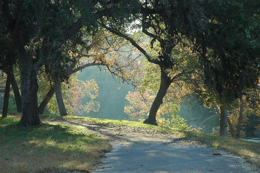 Cypress Creek Photograph - Morning Light by Robert Anschutz