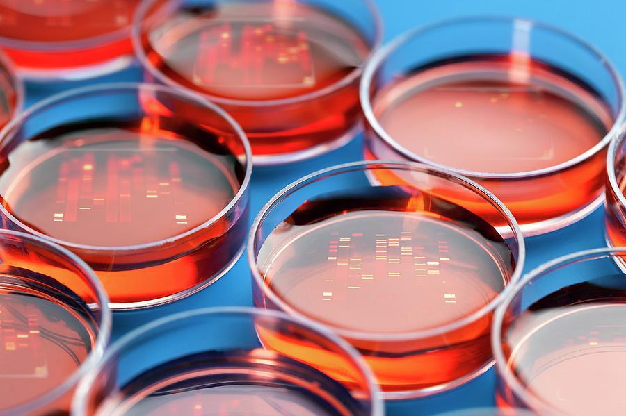 Close Up Photograph - Petri Dishes by Wladimir Bulgar