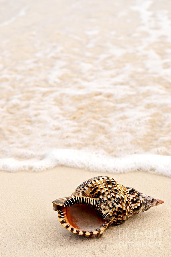 Seashell Photograph - Seashell And Ocean Wave by Elena Elisseeva