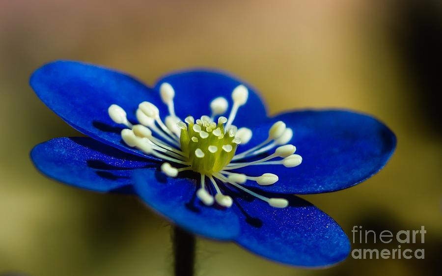 Blue Photograph - Spring by Sylvia  Niklasson