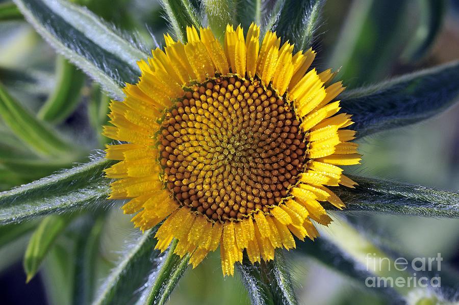 Spring Wild Flower Photograph by George Atsametakis
