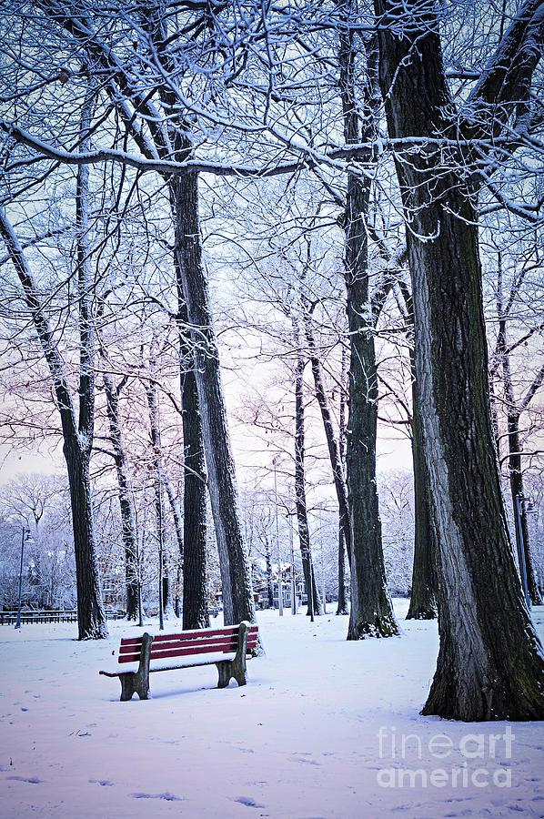 Winter Photograph - Winter Park by Elena Elisseeva