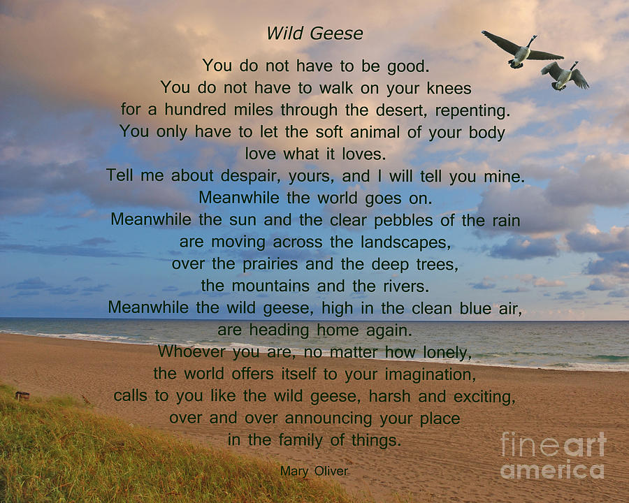 Wild Geese Photograph - 40- Wild Geese Mary Oliver by Joseph Keane