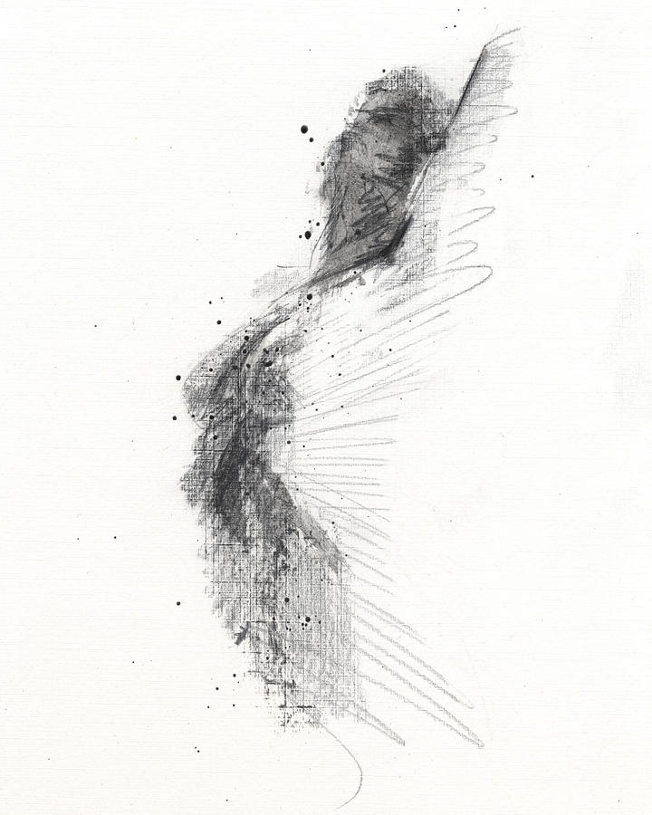 Black And White Drawing - Untitled 353 by Chris N Rohrbach