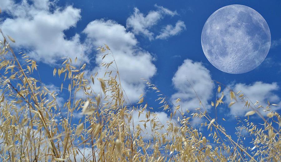 Blau Photograph - Full Moon by Werner Lehmann