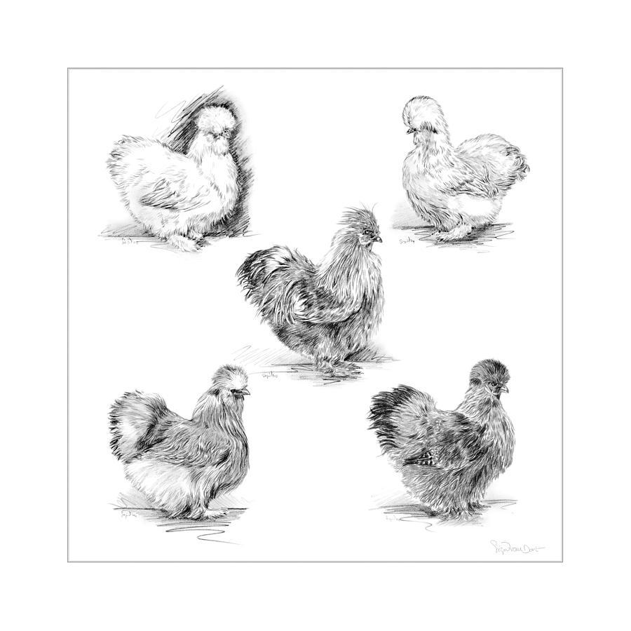 Chicken Digital Art - 48. Silkies Pencil Drawing by Sigrid Van Dort