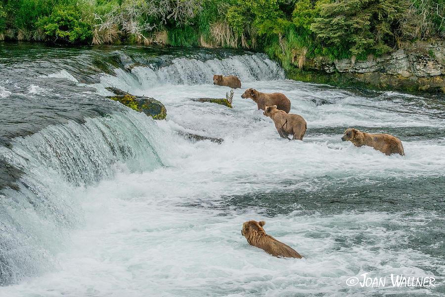 Alaska Photograph - 5 Grizzlies by Joan Wallner