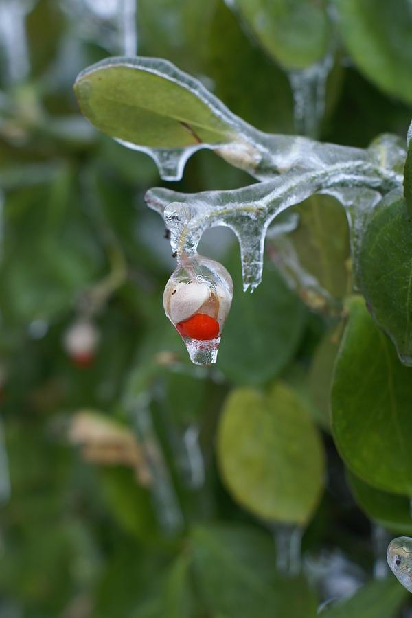 Ice Photograph - Ice by Heidi Poulin