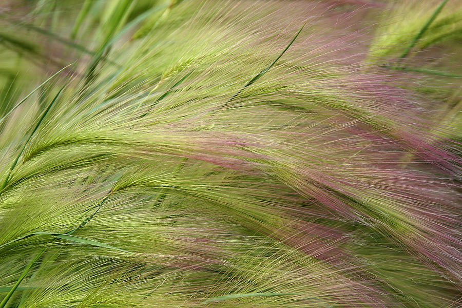 Nature Photograph - Whispers by Lon Goudey