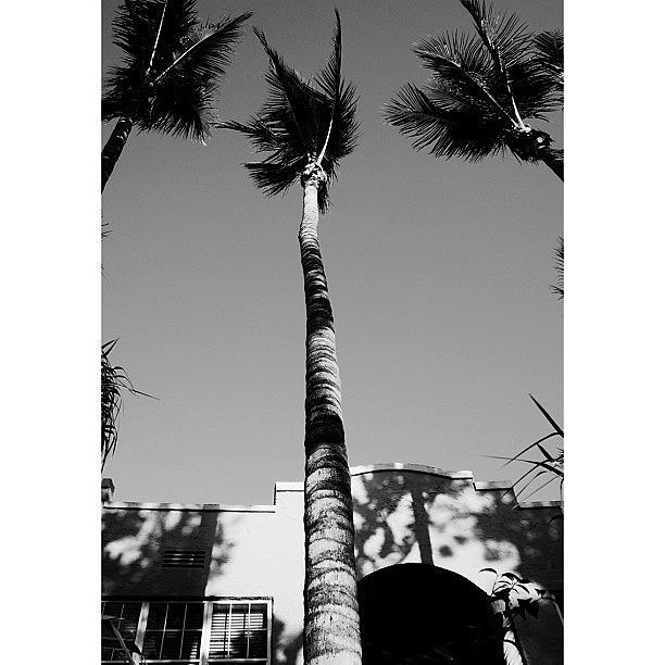 Blackwhite Photograph - {miami Beachs Art Deco}  In 1979 5 by Joel Lopez