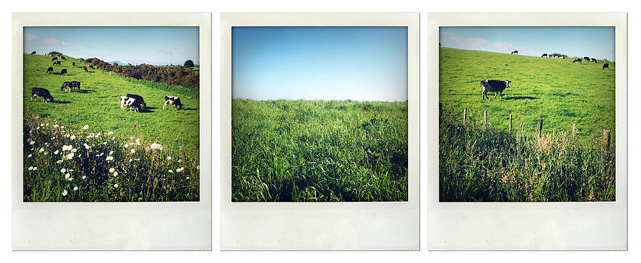 Field Photograph - New Zealand by Les Cunliffe