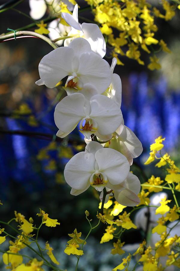 Orchid Rainbow Photograph