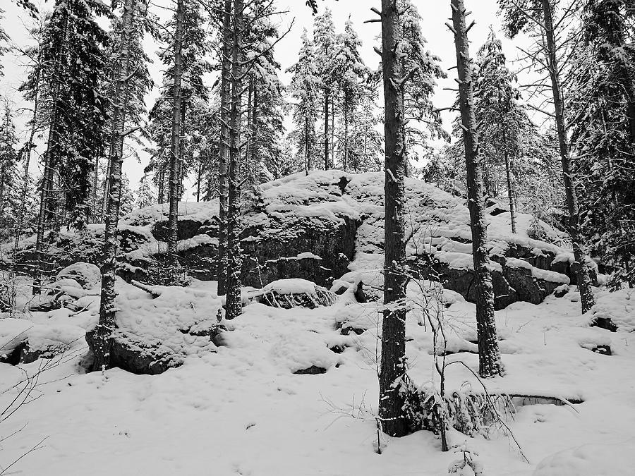 Finland Photograph - Pine Forest Winter by Jouko Lehto