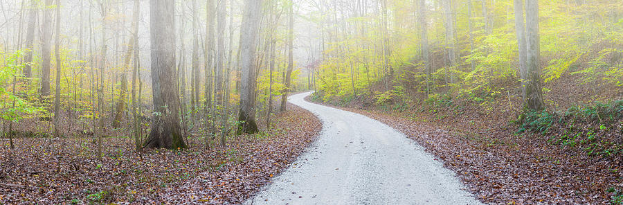Horizontal Photograph - Road Passing Through A Forest by Panoramic Images