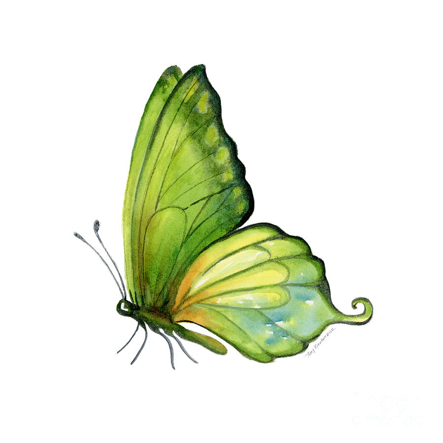 5 Sap Green Butterfly Painting By Amy Kirkpatrick