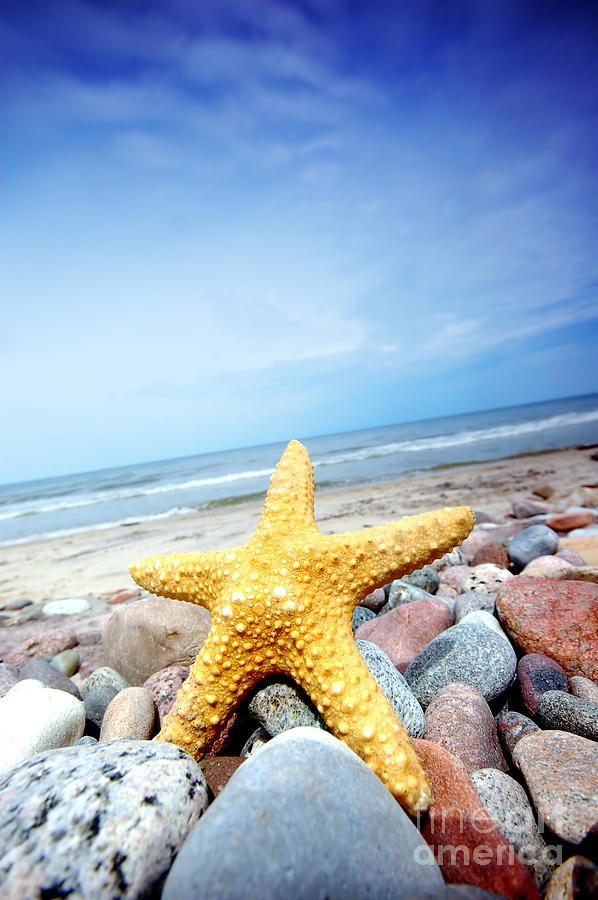 Abstract Photograph - Starfish by Michal Bednarek