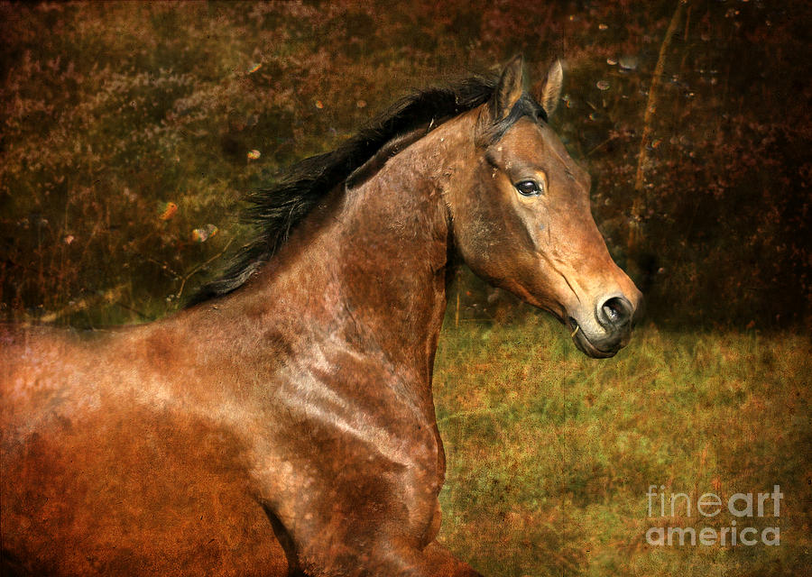 Horse Photograph - The Bay Horse by Angel Ciesniarska