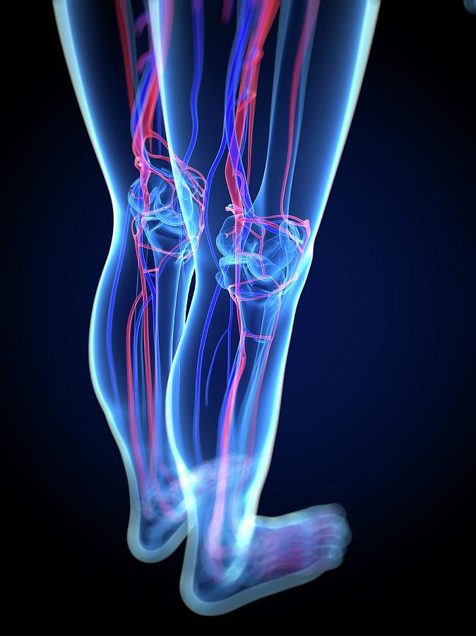 Vascular System, Artwork Digital Art by Sciepro