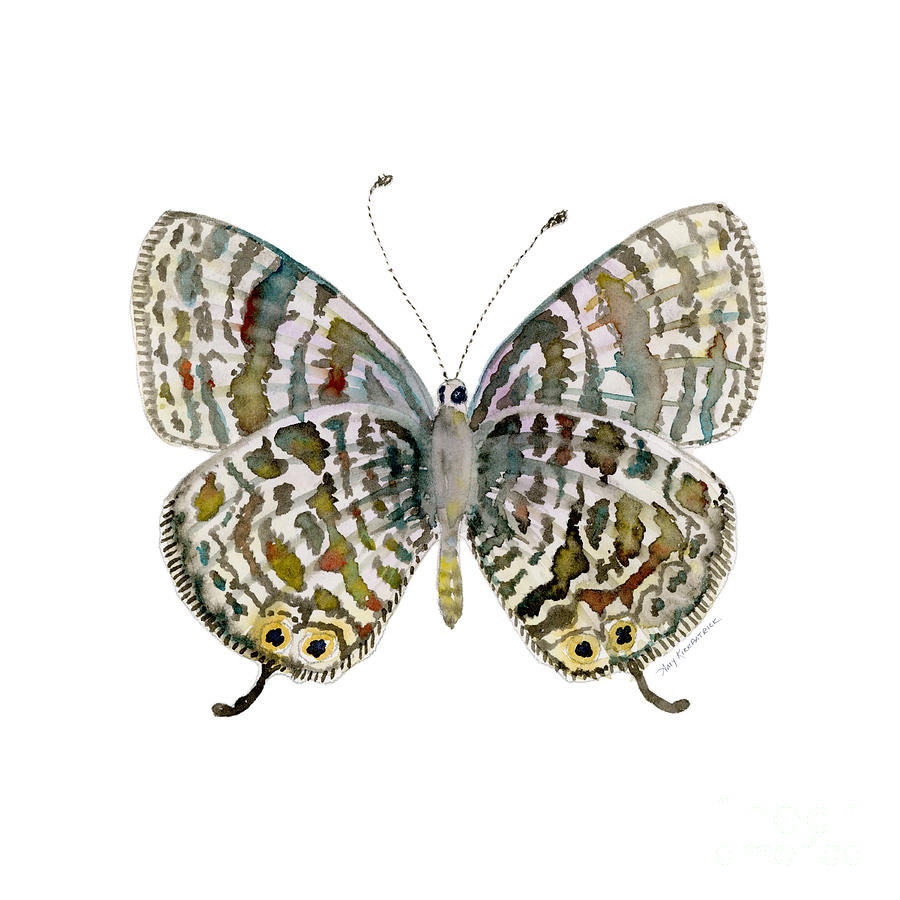 Lang Painting - 51 Langs Short-tailed Blue Butterfly by Amy Kirkpatrick