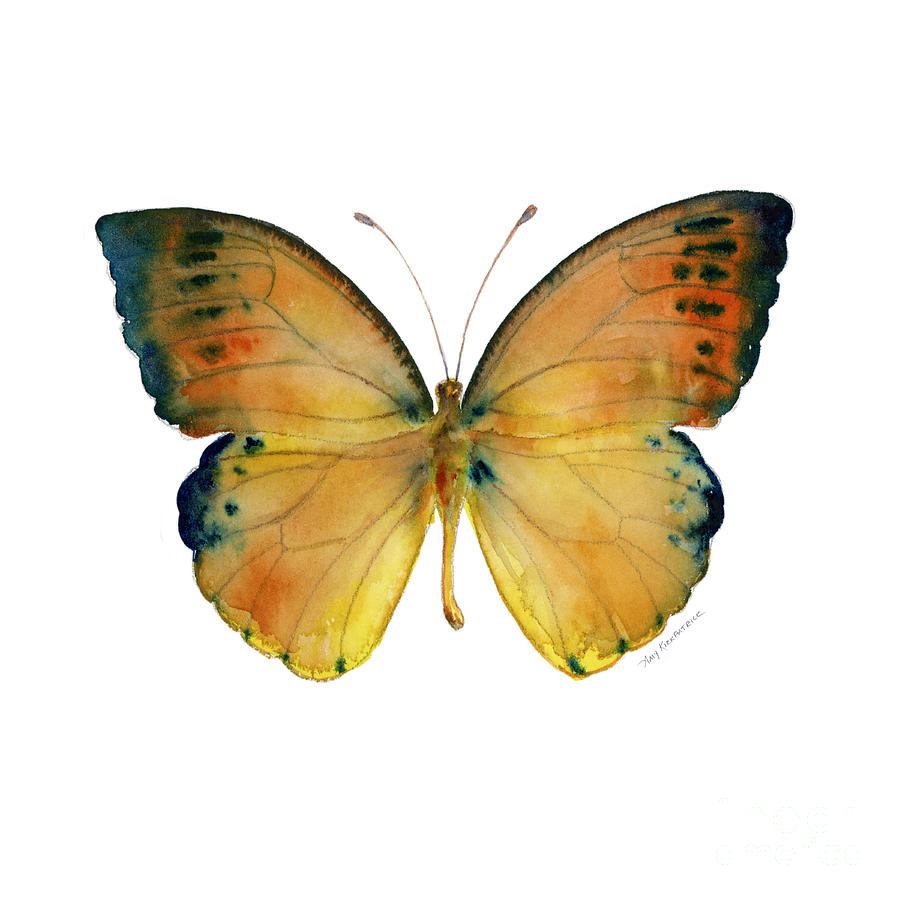 Leucippe Painting - 53 Leucippe Detanii Butterfly by Amy Kirkpatrick