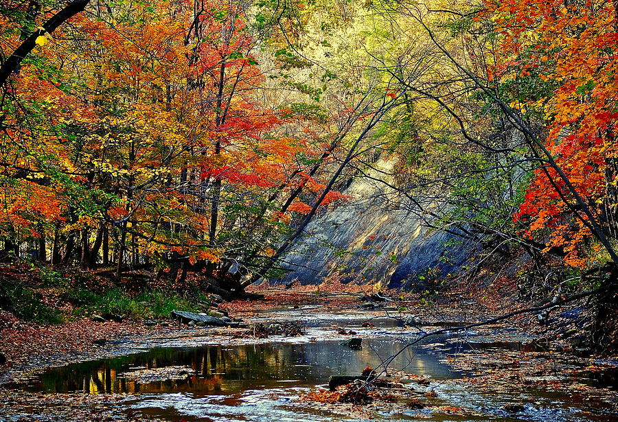 Autumn Photograph - Autumn Stream by Frozen in Time Fine Art Photography