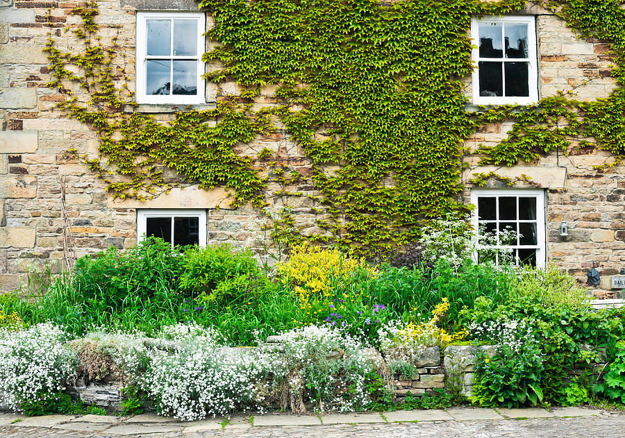 Accommodation Photograph - Cottage Garden by Tom Gowanlock
