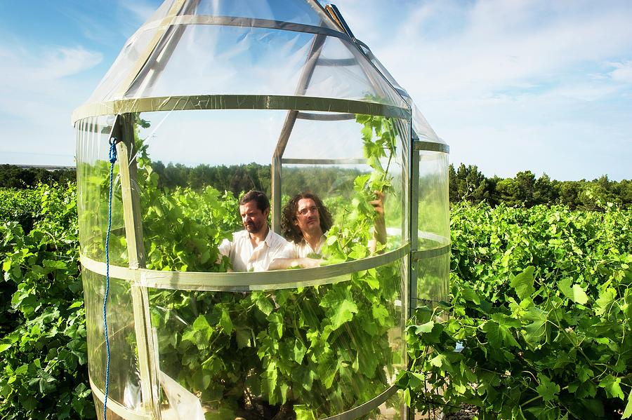 Two People Photograph - Effect Of Climate Change On Wine by Philippe Psaila