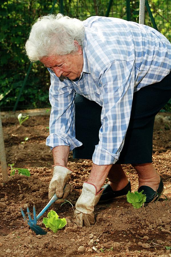 Equipment Photograph - Elderly Lady Gardening by Mauro Fermariello/science Photo Library