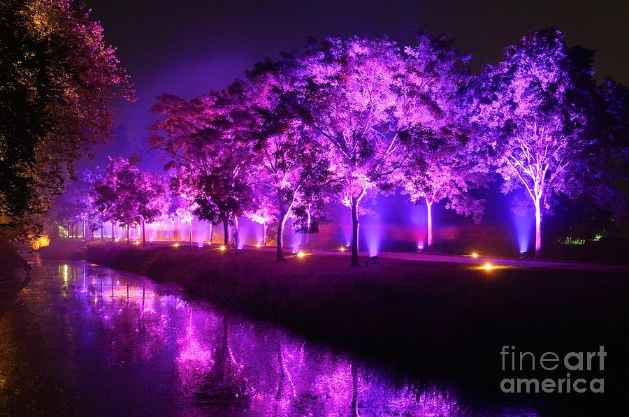 Trees Photograph - Illumina Light Show At Schloss Dyck Germany by David Davies