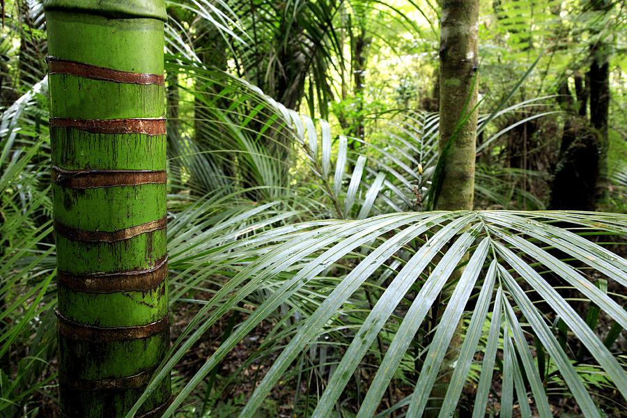 Tropics Photograph - Jungle by Les Cunliffe
