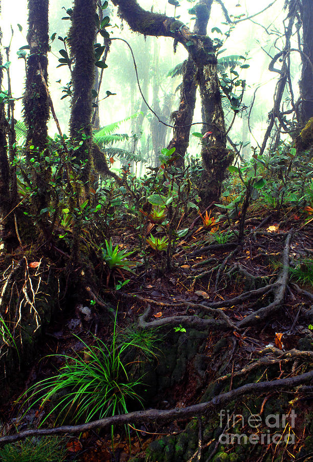 Puerto Rico Photograph - Misty Rainforest El Yunque by Thomas R Fletcher
