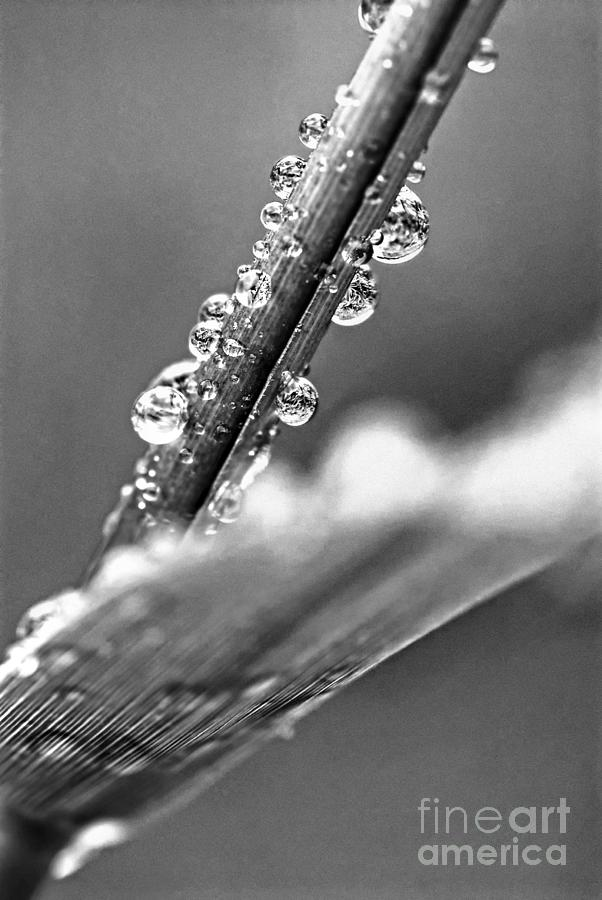 Grass Photograph - Raindrops On Grass by Elena Elisseeva