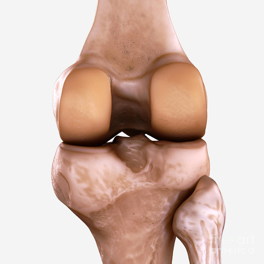 Right Knee Bones Photograph by Science Picture Co