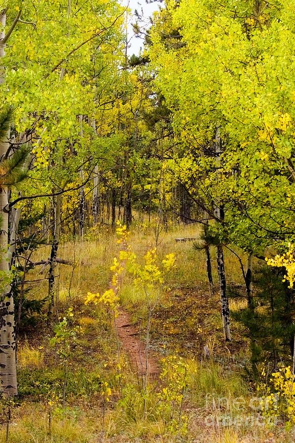 Autumn Photograph - Rocky Mountain Autumn by Steven Krull