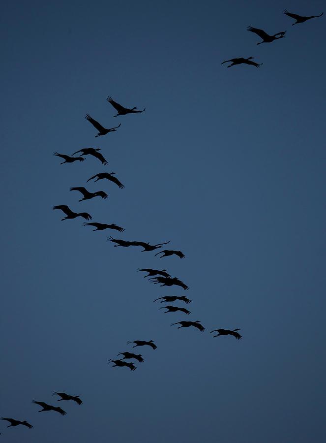 Sky Photograph - Sandhill Migration by Jeffrey Phelps