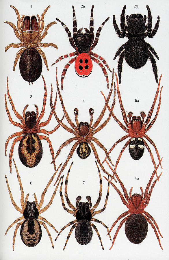 Animal Photograph - Spiders Of Britain And Northern Europe by Natural History Museum, London/science Photo Library