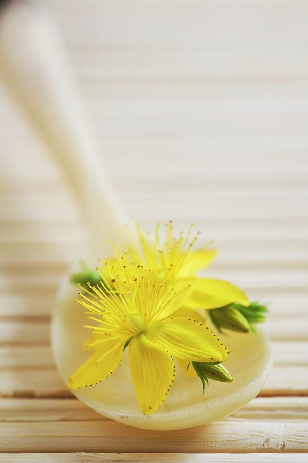 Alternative Photograph - St. Johns Wort (hypericum Perforatum) by Gustoimages/science Photo Library