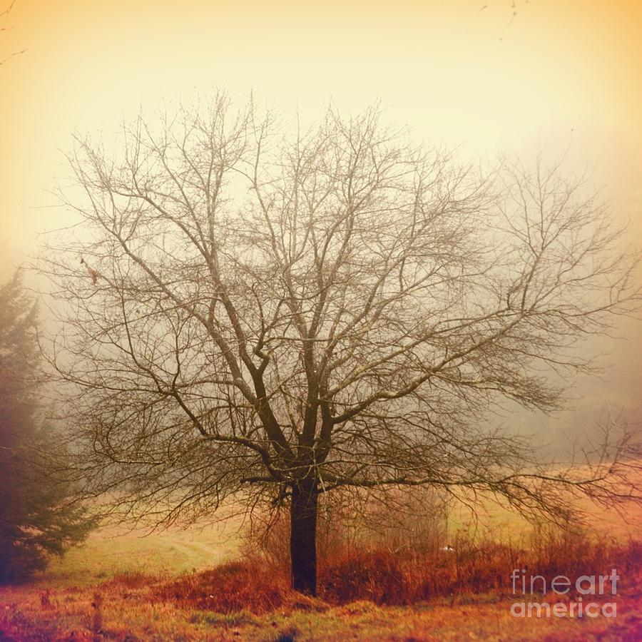 Tree Photograph - Tree by HD Connelly