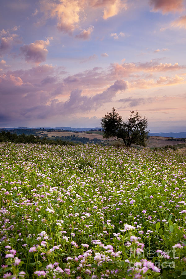 Field Photograph - Tuscany by Brian Jannsen